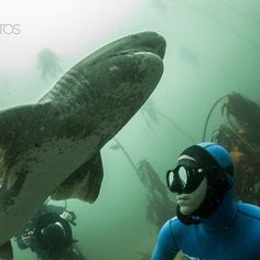 "Photo Of The Week: ""Encounter Between a Sevengill Shark and Freediver"" by…"