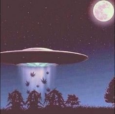 Aliens need Weed...?                                                                                                                                                     More