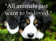 All animals just want to be loved