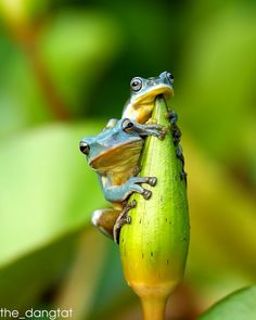You don't care ? by The DangTat on 500px
