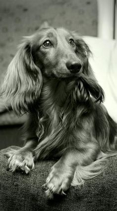 Dachshund Parade: Archive