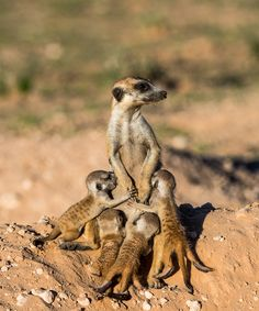 Motherhood by Denis Roschlau - Photo 196374859 / 500px