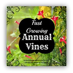 Fast Growing Annual Vines. For seed giveaways, daily tips and plant info, come join us on facebook! https://www.facebook.com/thegardengeeks