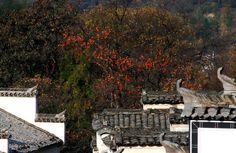 Tachuan Village Autumn Landscape
