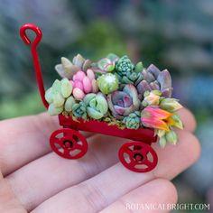Tiny Plant Gallery – Botanical Bright - Products for Plant Lovers Succulent Arrangements, Cacti And Succulents, Planting Succulents, Planting Flowers, Cactus Plante, Diy Doll Miniatures, Mini Plants, Little Plants, House Plants Decor