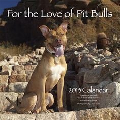 For the Love of Pit Bulls 2013 Wall Calendar