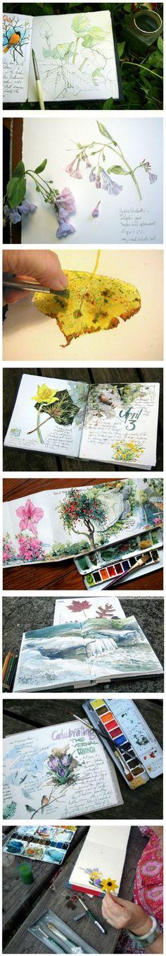 美国自由水彩画家Cathy Johnso...@☆纯净水☆㊣采集到手绘植物(804图)_花瓣插画/漫画