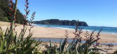 Cathedral Cove and Hot Water Beach Express Cathedral, Trips, Activities, Adventure, Beach, Hot, Water, Water Water, Seaside