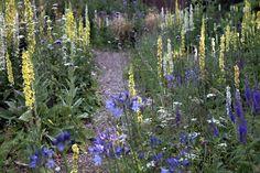 Holbrook Garden - Devon Gardens Open - Gardens to Visit