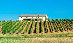 Vine plantations and farmhouse in Italy ...  agriculture, beauty, chianti, country, countryside, cultivation, europe, farm, farmhouse, field, fruit, garden, grape, green, ground, growth, harvest, hill, house, italian, italy, landscape, nature, olive, plant, plantation, plowed, row, rural, sky, summer, travel, tree, tuscany, valley, view, vine, vineyard, vineyards, wine, winery