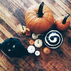 Image de pumpkin, Halloween, and cat