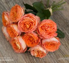 Orange Garden Rose david austin charity rose, a pale pink garden rose with a green