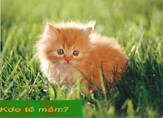 Very interesting post: TOP 52 Funny Cats and Kittens Pics.сom lot of interesting things on Funny Animals, Funny Cat. Animals And Pets, Baby Animals, Funny Animals, Cute Animals, Animal Jokes, Animal Pics, Cute Kittens, Cats And Kittens, Ragamuffin Kittens