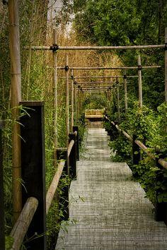 Yoga Garden Photograph - Yoga Garden Walk With Bamboo Trellis by Greg Kluempers Small Japanese Garden, Japanese Garden Design, Japanese Pergola, Japanese Garden Backyard, Japanese Garden Landscape, Zen Garden Design, Japanese Gardens, Bamboo Trellis, Garden Trellis