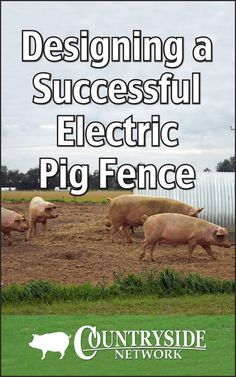Add to Favorites The old adage goes: a fence should be horse high, hog tight, and bull strong. In a homesteading lifestyle where livestock is raised, quality fencing is of the … Pig Fence, Farm Fence, Livestock Farming, Pig Farming, Pot Belly Pigs, Old Adage, Mini Farm, Baby Pigs, Hobby Farms