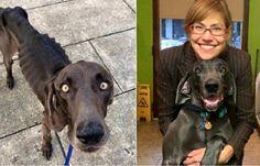 Dog Who Survived Eating Rocks Finally Finds Forever Home