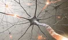 New research reveals the cellular mechanisms by which memory-encoding neuronal networks emerge