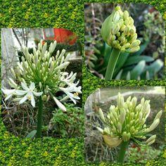 Ciento en uno - ciento en flor