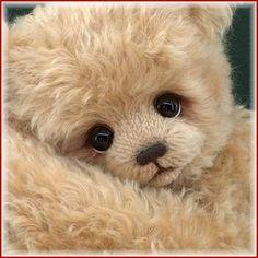 Image from http://www.bearpile.com/user/1458/1367434563b.jpg.