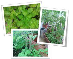 ako pestovat zeleninu na balkone