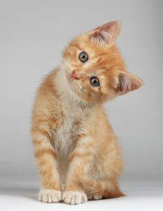 Katze (47)