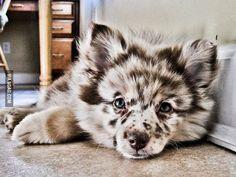 Freckled Dog - 9GAG