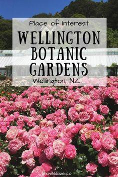 Place of Interest: Wellington Botanic Garden // Wellington, New Zealand