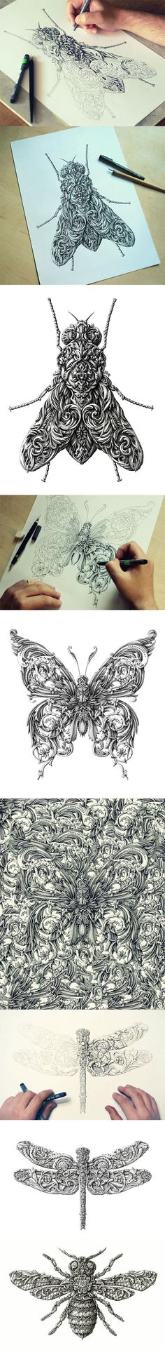 Awesome renaissance-style insect drawings.. if you click on the picture, read the comments, because they are hilarious!