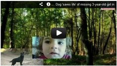 Dog 'saves life' of missing 3-year-old girl in the Forest!! Watch here:  http://gdurl.tk/Gp