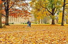 Penn State in the fall