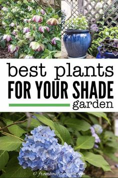 This list of the best shade loving shrubs and perennials is awesome! There are lots of plant options for containers, to grow under trees and that are low maintenance to cover any shade garden landscaping possibilities. #fromhousetohome #gardening #gardenideas #shade #plants #shadeplants Shade Loving Shrubs, Partial Shade Perennials, Shade Flowers Perennial, Flowers Perennials, Shade Shrubs, Full Sun Perennials, Perennial Bushes, Shade Garden, Plants Under Trees