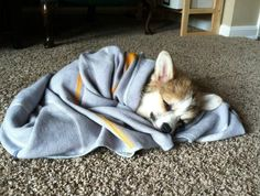 all wrapped up and ready for bed!