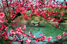 Let love blossom in the spring. Hangzhou, China~!