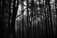creepy forest