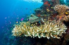 Diving heaven! The Tubataha Reef National Park in the Sulu Sea is a World Heritage site and is considered as one of the best places in the world for diving. Located southeast of Puerto Princesa City in the Palawan Province.