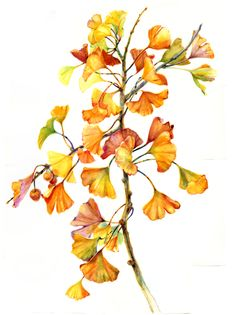 Autumn Gingko, watercolor by Amber R Turner