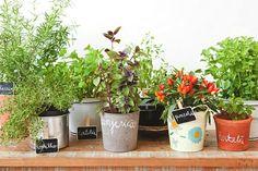 My little garden Sante Bio, Edible Garden, Window Sill, Planter Pots, Flora, Plants, Dyi, Gardens, Dreams