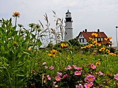 The Softer Side (flowers lighthouses ). Photo by llpj04