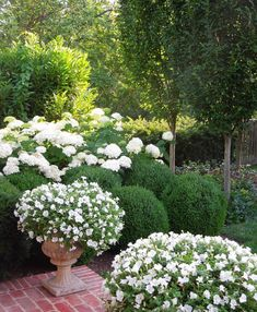 I love a white and green garden - timeless and so soothing. Here I planted Annabelle hydrangeas, English yews, boxwoods, laurels,…