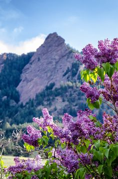The Flatirons - Colorado -- photo: Teryn & Kate on Flickr