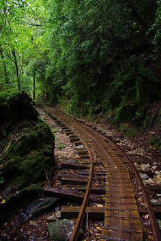 Forest railway, Yakushima Island, Kagoshima, Japan