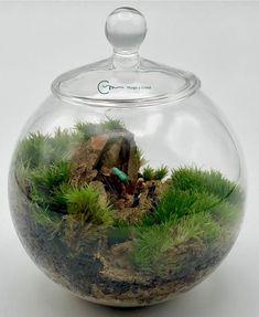 Terrario de musgo vivo en bola de cristal de diámetro 10 cm. Todos los productos utilizados son naturales, salvo los muñecos. ¿Qué habrá ahí ? ¿Será una guarida ? .....mejor seguimos nuestro camino ... Natural, Home Decor, Moss Terrarium, Terrariums, Mini Gardens, Crystal Ball, Fairies Garden, Products, Crystals