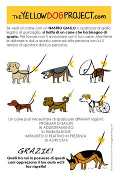 The Yellow Dog Project italian Flyer  http://meandmyfurryfriends.wordpress.com/2013/05/14/the-yellow-dog-project/