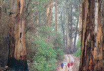 Sud Ouest - Forêts de Karris