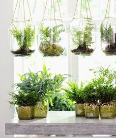 Hanging Garden: The Best Indoor Gardens - mom.me