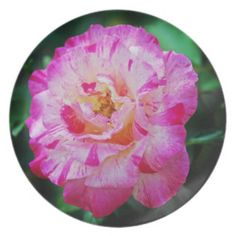 Candy striped pink rose dinner party plates