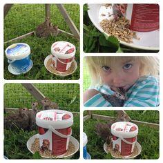 Vatten- och foderautomater för kycklingar