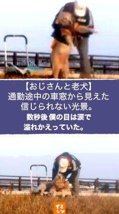 東京都在住の池ヶ谷大輔さんが今から3ヶ月ほど前、Facebook上に投稿した動画がネット上で話題を呼んでいます。その動画は1匹のレトリーバーとその飼い主のおじさんを映した、わずか23秒の動画です。以下はその動画に添えられた文章です。 #犬 #わんこ #老犬 #介護 #いい話 #感動 #泣ける Animals And Pets, Baby Animals, Pet Dogs, Dog Cat, Dogs Golden Retriever, Cute, Facebook, Origami, Gatos