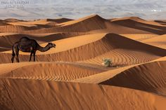 Alone between the dunes by Tariq Almutlaq on 500px