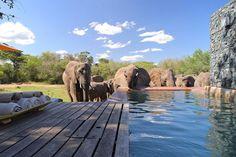 La piscine de l'hôtel AndBeyond Phinda Homestead en Afrique du Sud